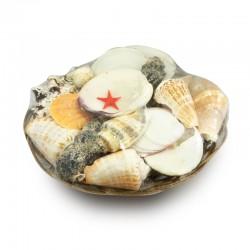 Canasta con mix de conchas