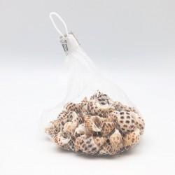 Conchas pardo decorativas